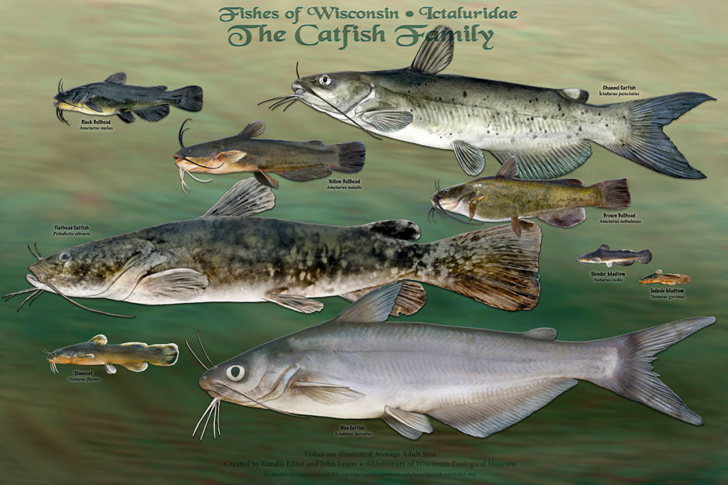 The Catfish Family Poster