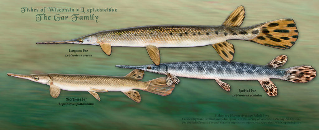 The Gar Family Poster