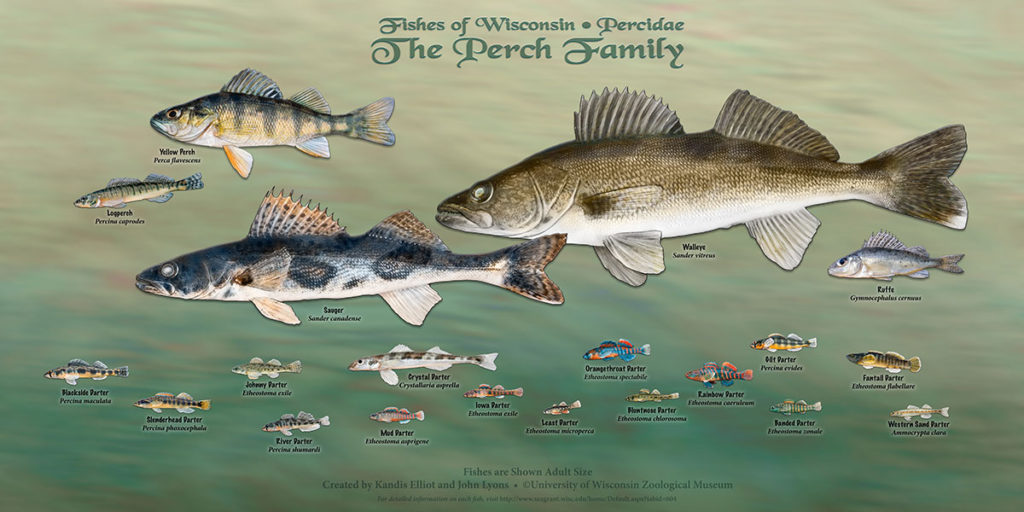 The Perch Family Poster
