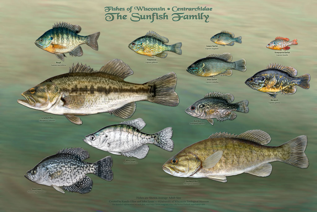 The Bass Family Poster