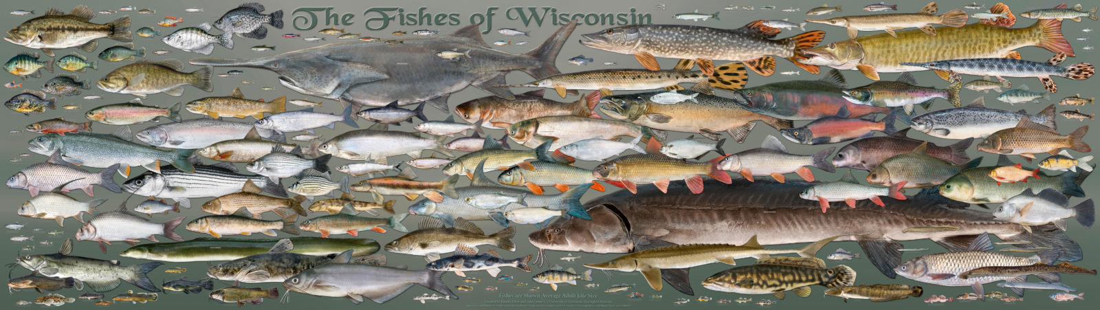 Fishes of Wisconsin
