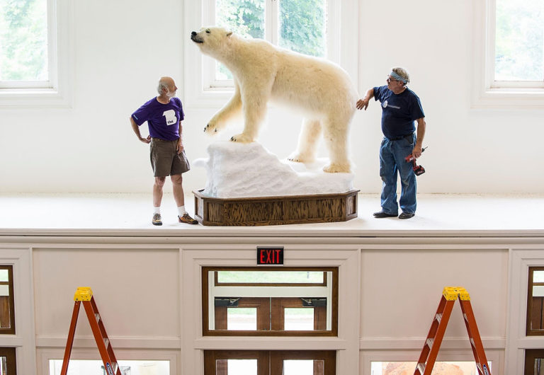 birge hall polar bear