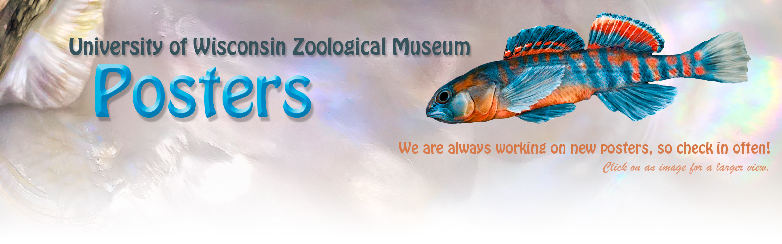 Museum Store banner