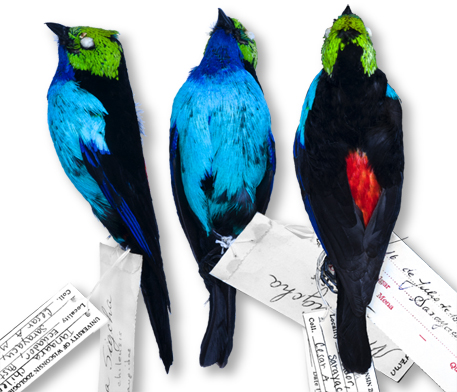 3 bird skins